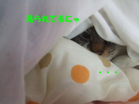 6_20121216170035.jpg