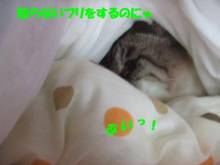 7_20121216170037.jpg