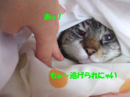 8_20121216170039.jpg
