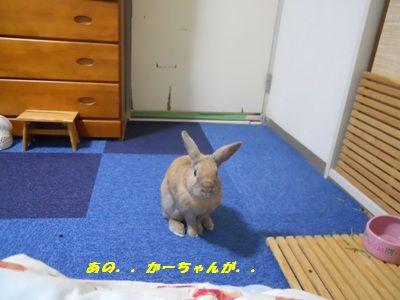 022_20101109175140.jpg