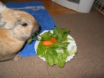 お野菜ウマウマ10-3-11 011