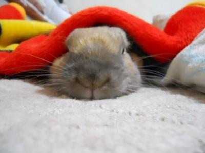 ヌクヌクで寝るでし 037