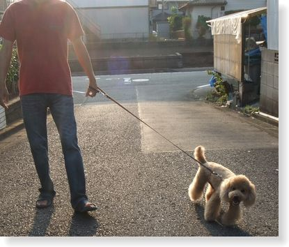 父さんと散歩