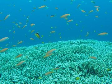 広いサンゴ