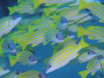 石垣島2012年6月19~21日 40101