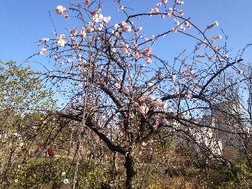3月2日檜町公園01
