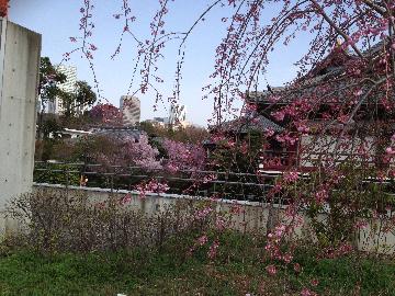 プリンス庭園からみた増上寺