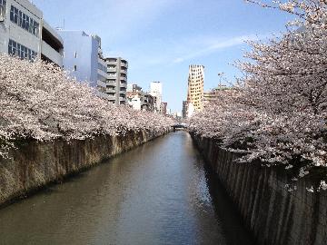 目黒川の桜3月23日011(1)