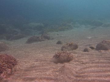 井田の砂の波紋