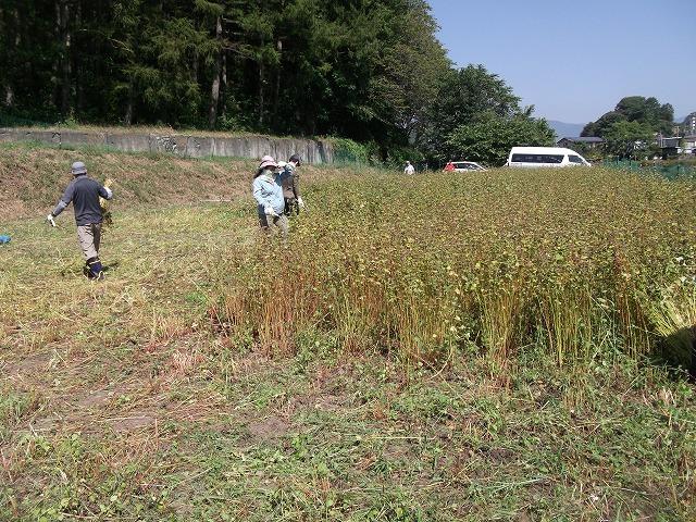 20140928そば刈り (2)