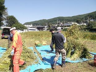 20140928そば刈り (10)