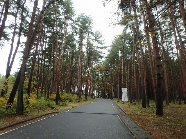 20141021風かのウルシ (2)