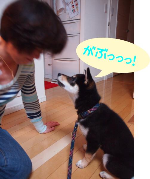 kai_Yoko_2.jpg