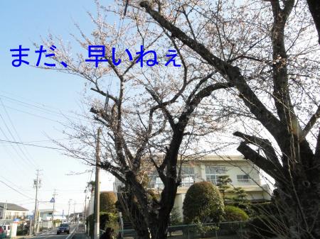 DSC00742_convert_20100327104211のコピー