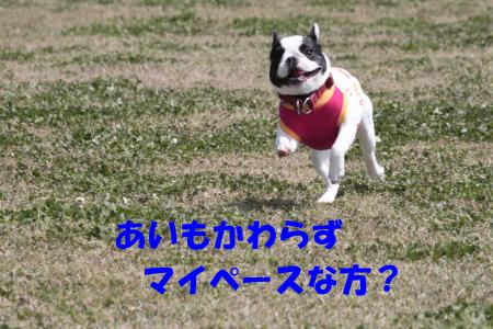 IMG_0228-10_convert_20100418233733のコピー