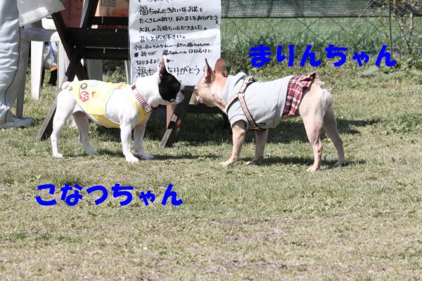 IMG_0394-2_convert_20100427215525のコピー