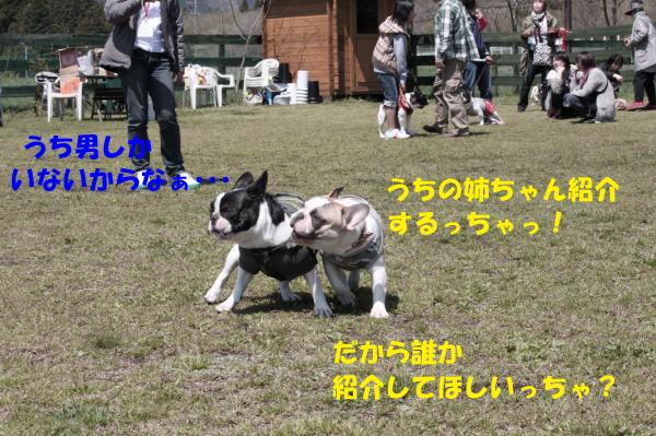 IMG_0475-12_convert_20100428151746のコピー