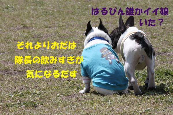 IMG_0489-18_convert_20100428152328のコピー
