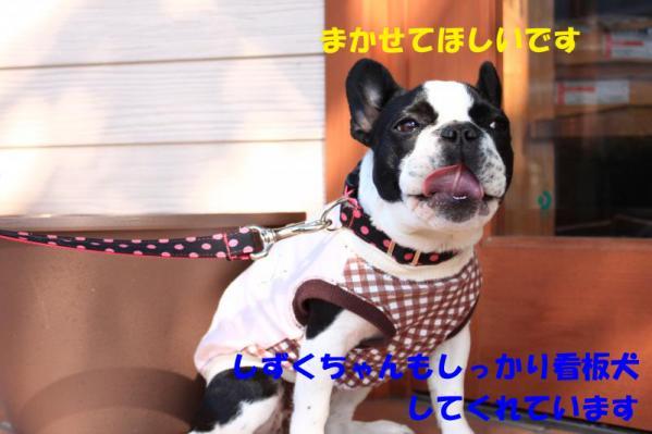 IMG_0598-3_convert_20100501165739のコピー