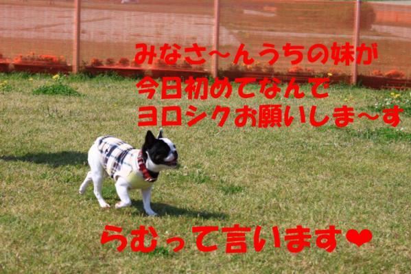 IMG_0669-2_convert_20100502231241のコピー