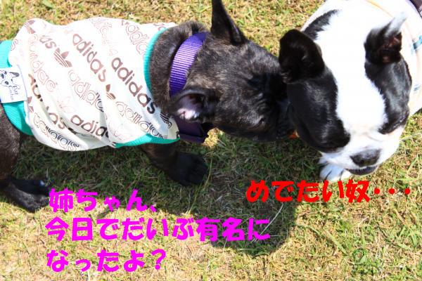 IMG_0764-22_convert_20100504224647のコピー