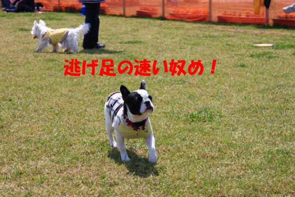 IMG_0762-11_convert_20100504224527のコピー