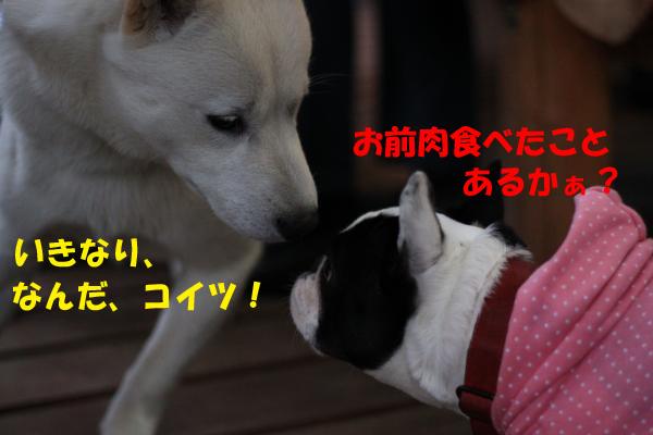 IMG_0815-8_convert_20100505230141のコピー
