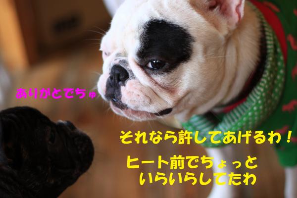 IMG_0958-9_convert_20100508224420のコピー