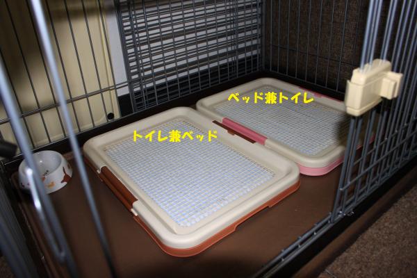 IMG_1418-6_convert_20100608235417のコピー