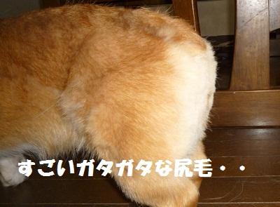 2011_0708_164159-P1100666.jpg