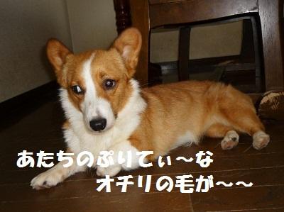2011_0708_164433-P1100674.jpg
