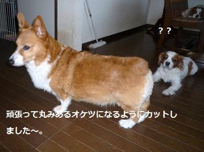 2011_0712_144517-P1100760.jpg