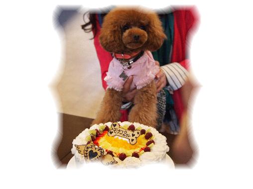 ケーキとモナちゃん