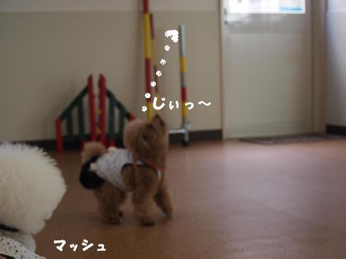 P5125417_20120513134511.jpg