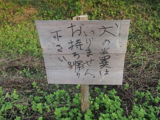 20140915・巾着田ネオン21
