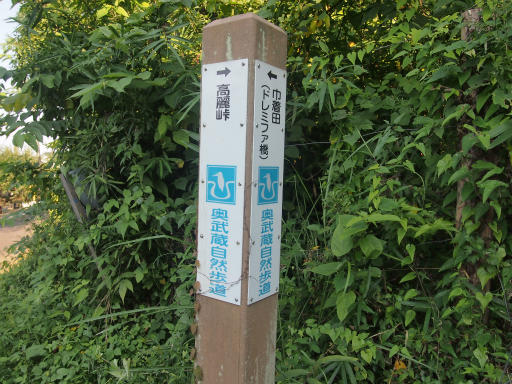 20140915・巾着田2-02