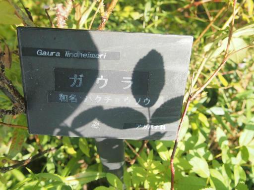 20140914・フラワーパーク植物04