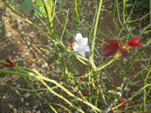 20140914・フラワーパーク植物03