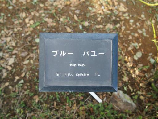 20140914・フラワーパーク植物02
