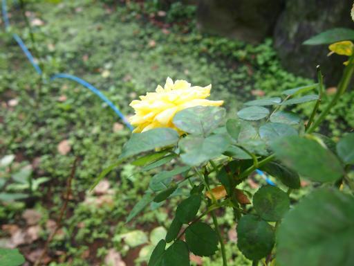 20140914・フラワーパーク植物09