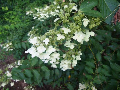 20140914・フラワーパーク植物11