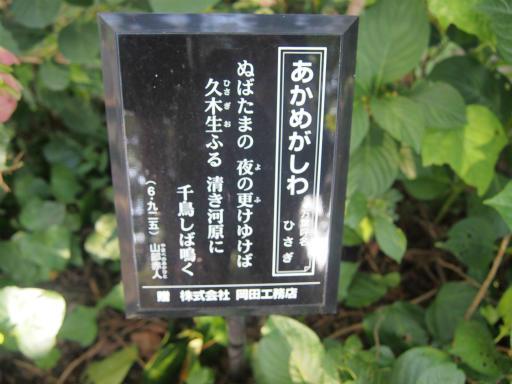 20140914・フラワーパーク植物10