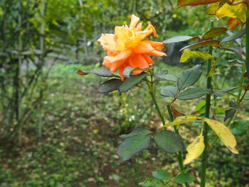 20140914・フラワーパーク植物07