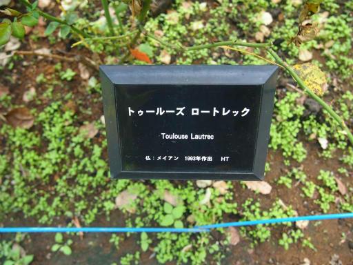20140914・フラワーパーク植物08