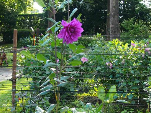 20140914・フラワーパーク植物14