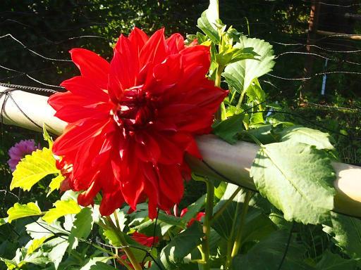 20140914・フラワーパーク植物15