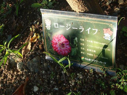 20140914・フラワーパーク植物13