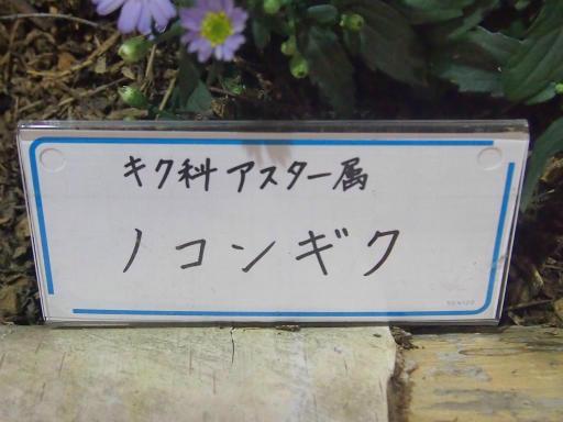 20140914・フラワーパーク植物23