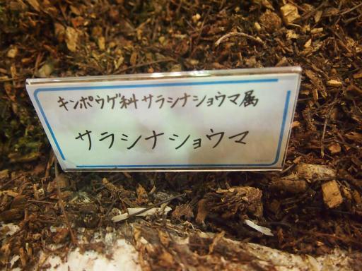 20140914・フラワーパーク植物19