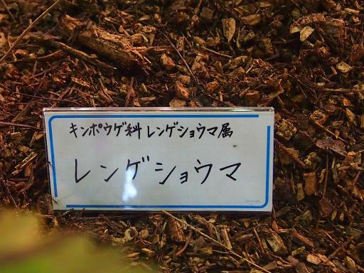 20140914・フラワーパーク植物21